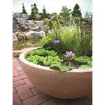 40004 Container Water Garden And Pond Maintenanc-3