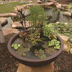 Aquatic Patio Pond Water Garden, 32-Inch Round 3