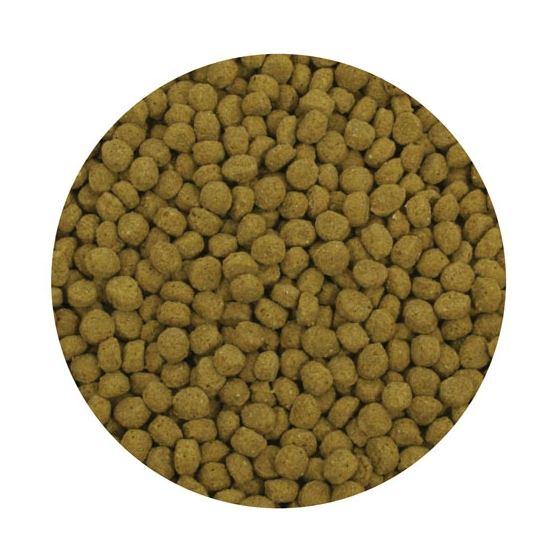 Premium Color Enhancing Fish Food Pellets - 10 kg3